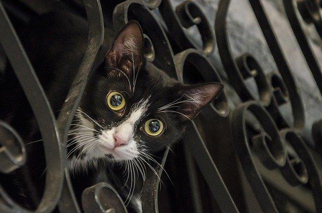 jakich zapachów nie lubią koty